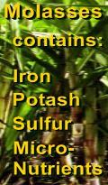 Ormus Minerals - Probiotics NUTRIENTS