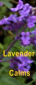Ormus Minerals Lavender Healing Ormus Oil - calms