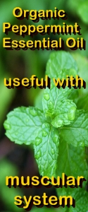 Ormus Minerals Organic Peppermint Healing Ormus Oil - useful with muscular system